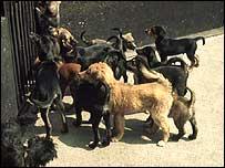 Puppies - generic