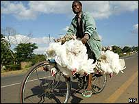 Man carrying chickens on a bicycle