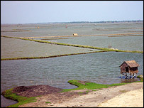 Shrimp farm, EJF