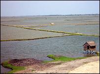 Shrimp farm, EJF