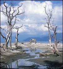 Damaged mangroves in Vietnam, EJF