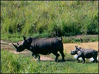 Endangered white rhinos in Garamba National Park, DRC.