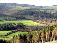 Scottish forest   BBC