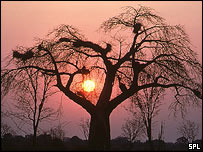 A baobab tree in South Luangwa National Park, Zambia, SPL