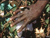 An African woman picking cotton