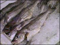 Haddock (BBC)