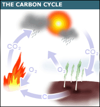 Graphic showing the carbon cycle (BBC)