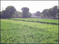 Green fields in Tillonia