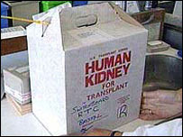 Human kidney for transplant