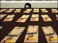 Mouse and traps - Corbis picture
