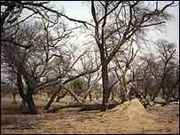 Bosques en extinción (Foto archivo)