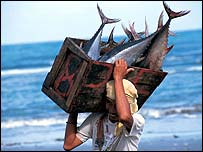 Filipino tuna fisherman with catch   WWF-Canon/Jurgen Freund