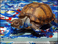 Koopa the turtle makes art for his US owner to sell on eBay