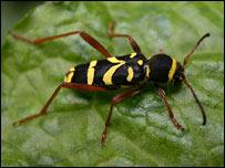 Bug on leaf, RSPB images