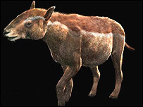 Propalaeotherium, BBC