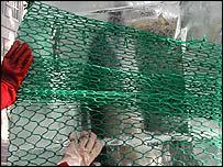 Dead dolphin encased in ice