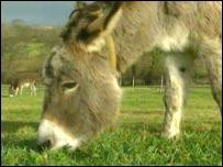 Donkey (generic)