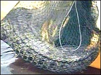 Hong Kong crocodile captured