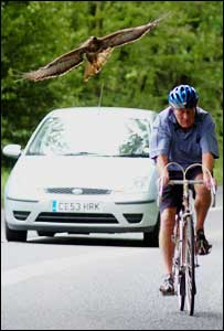 Cyclist Paul Dixon is attacked by a buzzard (Photo copyright: Apex)