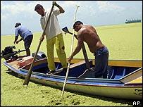 Pequeños pescadores intentan navegar sobre la capa vegetal.