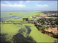 Una tercera parte del lago está cubierta por la planta flotante.