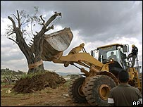 Caterpillar bulldozer carrying uprooted Palestinian olive tree