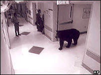 A black bear is seen on a surveillance camera walking into a Virginia hospital