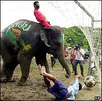 Human goalkeeper sprawls helplessly as the elephant knocks the ball in