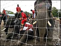 Elephants block the goalmouth
