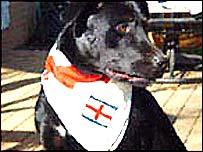 England dog bandana from eDirectory.co.uk