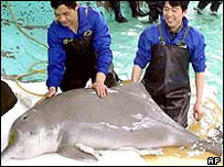 Chinese white dolphin (July 2002)