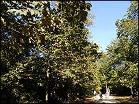 Trees - generic