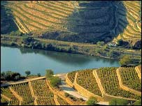 Port vineyards in the upper Douro Valley