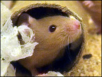 Mouse in cardboard tube, BBC
