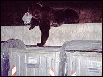 urso com saco plástico