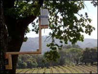 Sensor in vineyard, Accenture