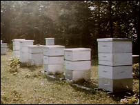 Bee hives, BBC