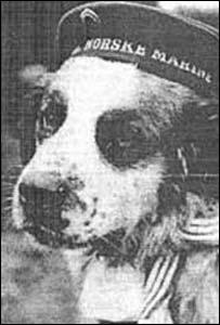 Bamse The Dog