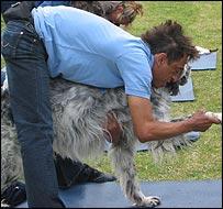 Canine yoga class