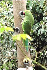 [Image: _40353703_bird300.jpg]