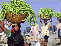 Cucumber farmers in Allahabad, India