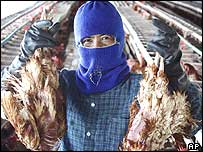 A worker on a Thai  farm where bird flu was been confirmed, July 2004