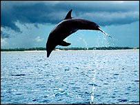 Dolphin - generic