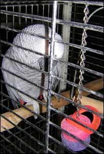 Parrot in a pet shop