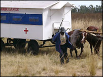 An ox-drawn ambulance in Zimbabwe