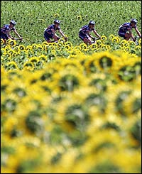 The US Postal rides nearby sunflower fields