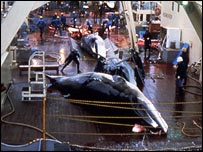 Dead whale on ship deck, Mark Votier/WDCS