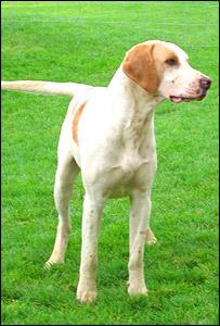 Fox hound, BBC