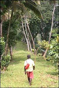 Employee walking through the plantation
