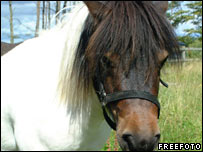 Picture of Shetland pony courtesy of FreeFoto.com